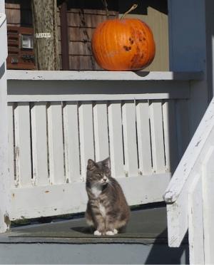 an Ilwaco cat
