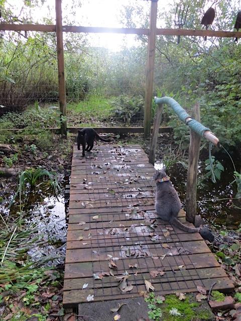 Onyx and Smokey on the bridge
