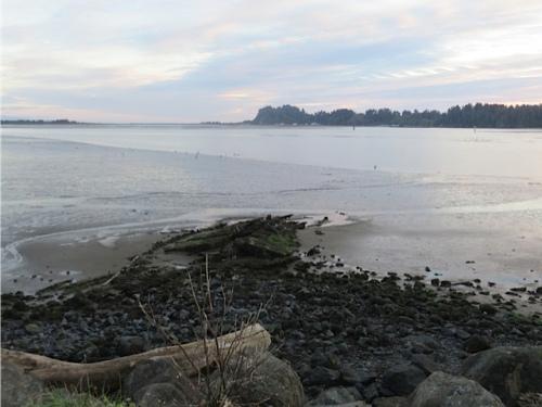 pre-sunset light, low tide