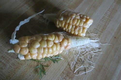 a pitiful harvest of sweet and delicious corn