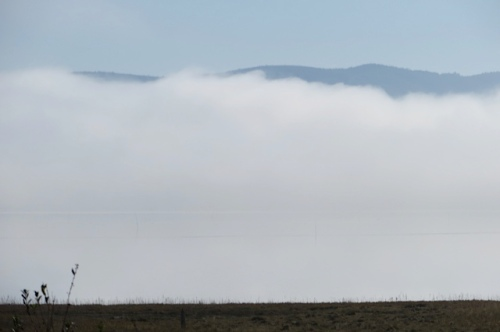 11:35 AM: fog starts to lift and the Willapa Hills peek out.