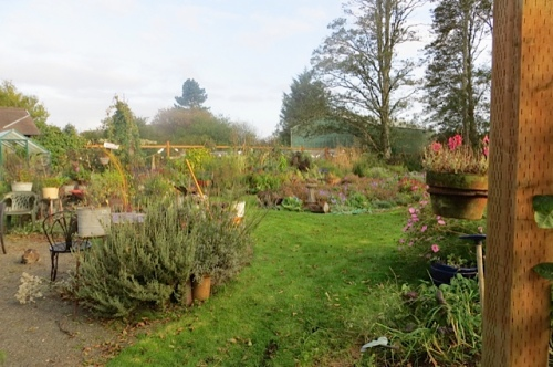 through a west gate: the autumn garden