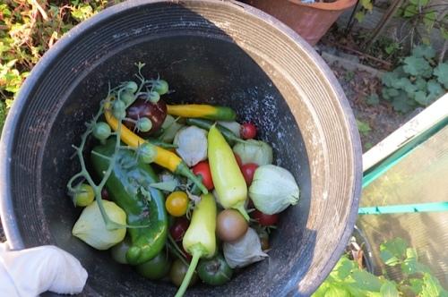harvest pot