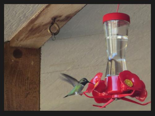 a hummingbird on Judy's porch
