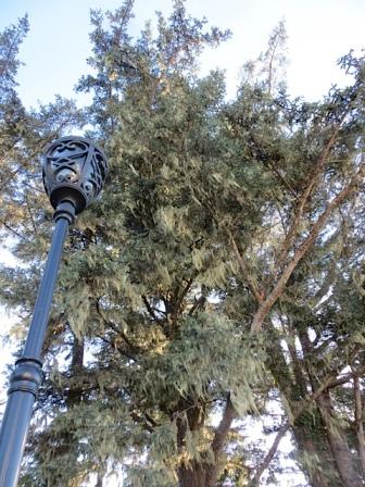 entry lamp