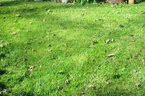 on the lawn Allan mowed just last night