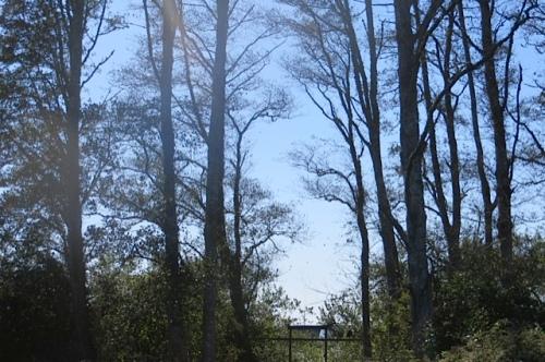 leaves were blowing hard off the Bogsy Wood alders.