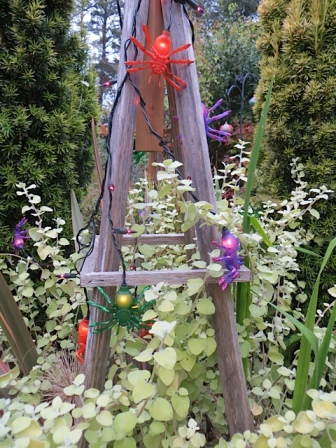 Halloween lights and Helichrysum 'Limelight'