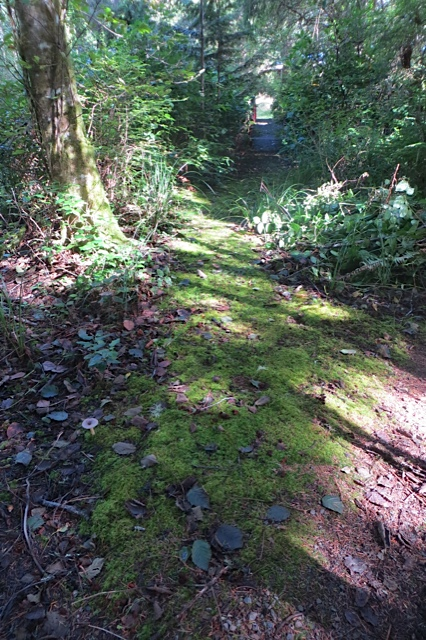enticing mossy path....