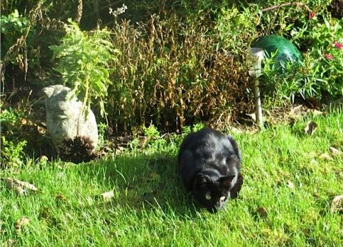 our neighbour, Onyx
