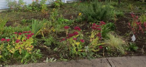 better, way few strawberries and fewer cranesbill geraniums
