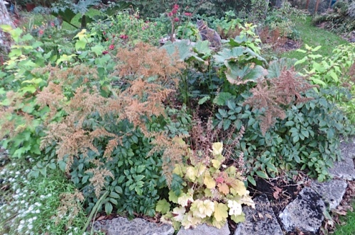 golds and browns (astilbe seedheads) in the shade garden