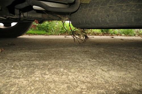 tire branch