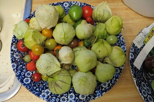 tomatoes and tomatillos