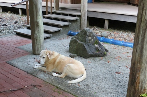 5:58 PM:  While we worked, Maddy was Zen Dog in the Zen Garden.