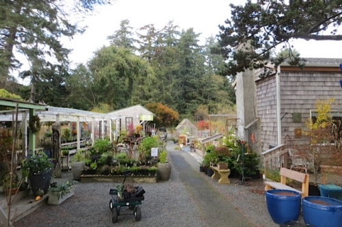Back Alley Gardens in Gearhart