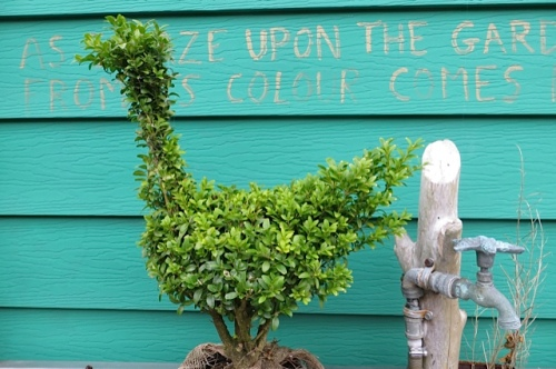 my topiary bird, a gift from Sarah Sloane