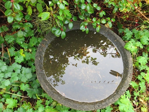 bird bath of stillness