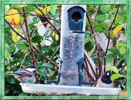 birds on one of Jo's feeders