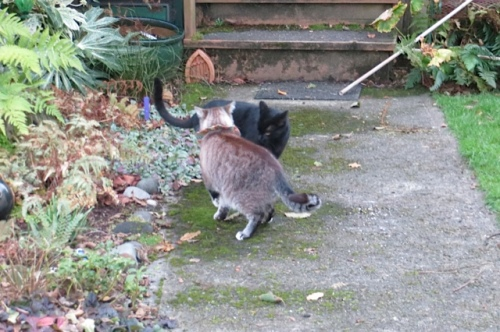 Frosty and our neighbour, Onyx, by Allan's garden.