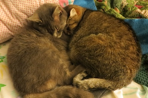 Smokey and his mom Mary are awfully cute.