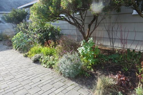 Courtyard garden, before, with more of the low glaring sun we are having daily.