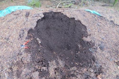 dairy manure...a great mulch