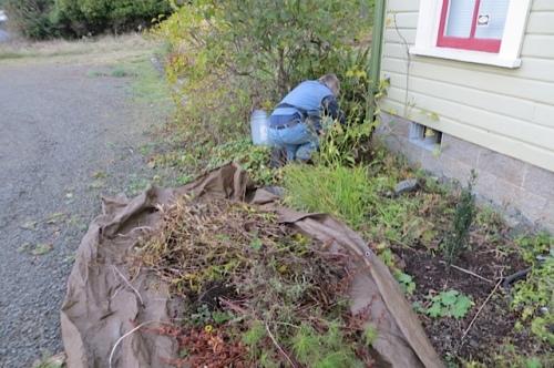 Allan chopping perennials