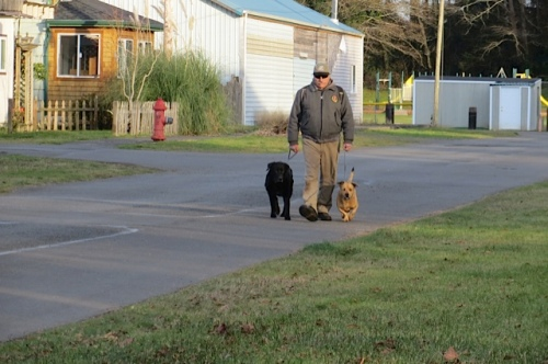 Dwight walking Larry and Big River.