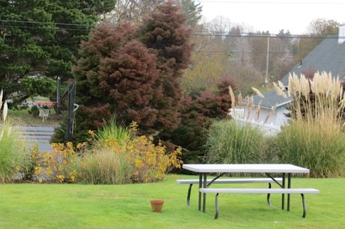 autumn colours by the sport court