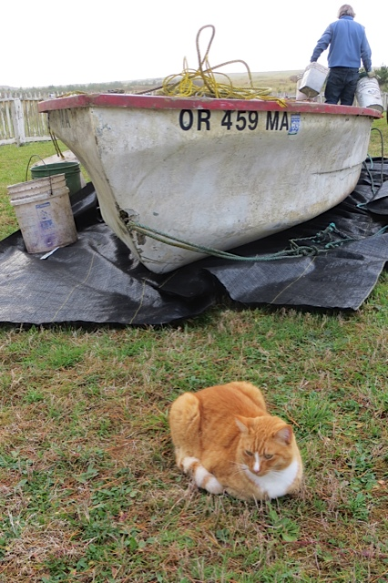 Felix and the boat