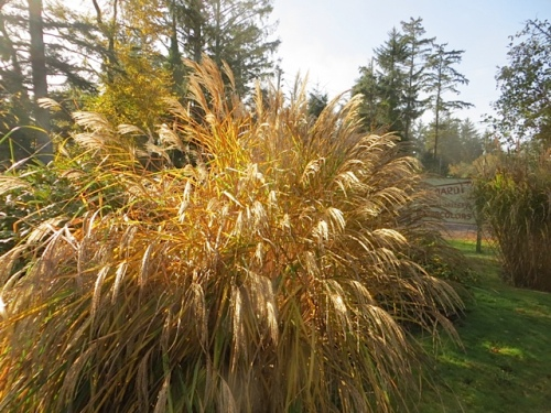glorious autumnal grass