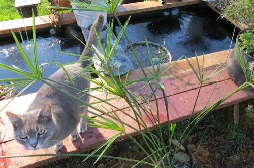 ice on the water feature (and Smokey following me as usual)