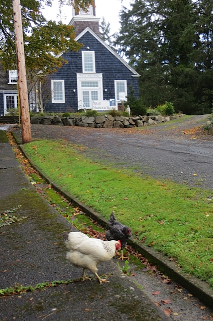 Inn at Harbour Village hens taking a stroll