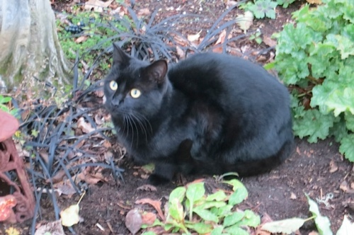 Onyx with black mondo grass