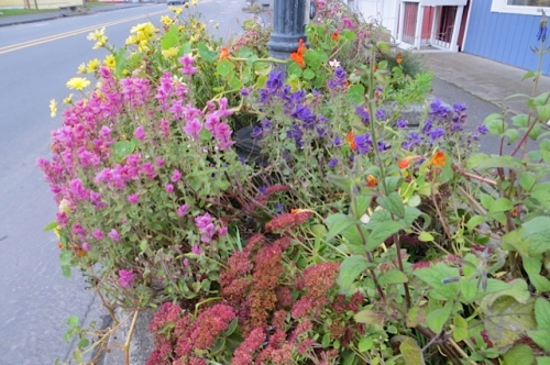 In fact, the planter looked downright summery.