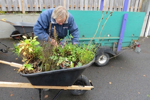 plants ready to be wheeled into the courtyard