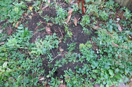 many weeds await our return in slightly warmer weather