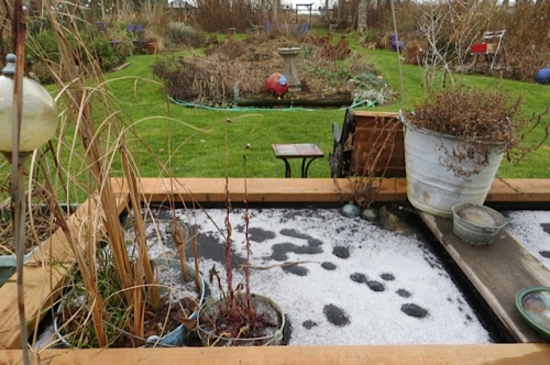 back garden: cat paws on the frozen water box