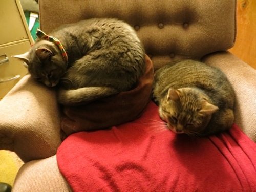 They appreciate the comfy chair I put in my office.