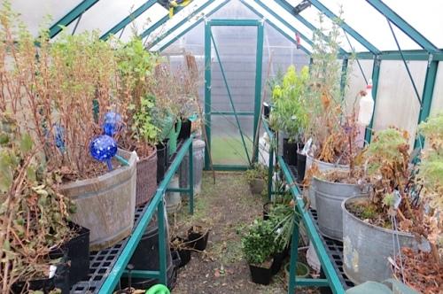 Looks hopeful in the greenhouse