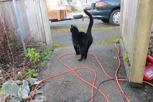 The neighbour cat, Onyx, supervising