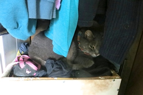 Meanwhile, Smokey has found a new cave in the closet where he sleeps every day now.