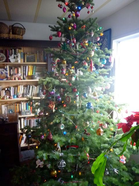 This tree we had (from The Planter Box) in 2010 was better suited for my vast array of ornaments.