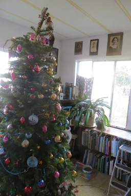 Our lovely tree was in my new garden book corner.