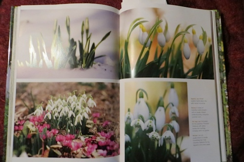 Galanthus pages in The Layered Garden