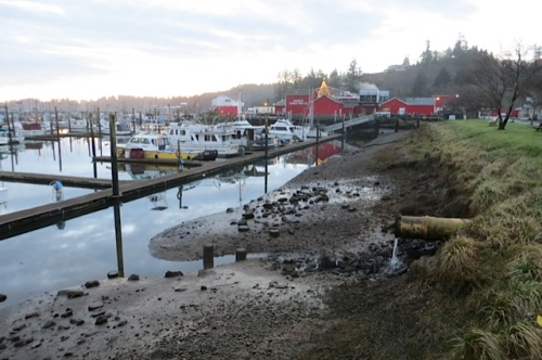 low tide and the final showing of the Jessie's star