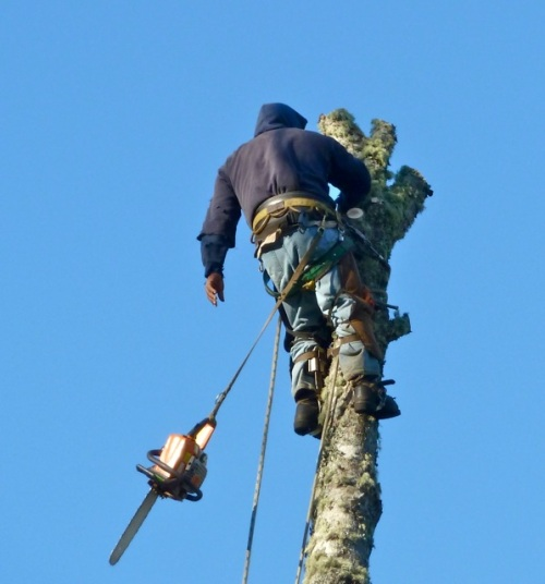 He lowered the chainsaw after cutting the top off, and a new one was raised up to him.  Maybe a bigger one.
