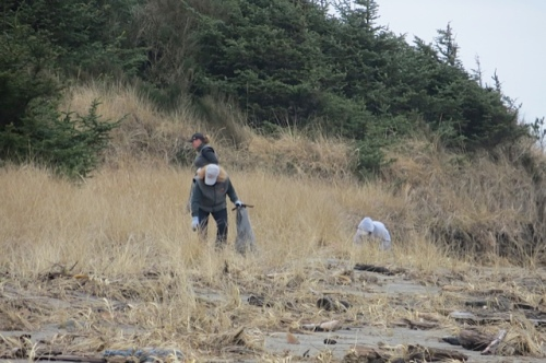 volunteers in the dunes on the north side of the creek