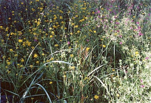 a photo of the wildflower bank from 1993